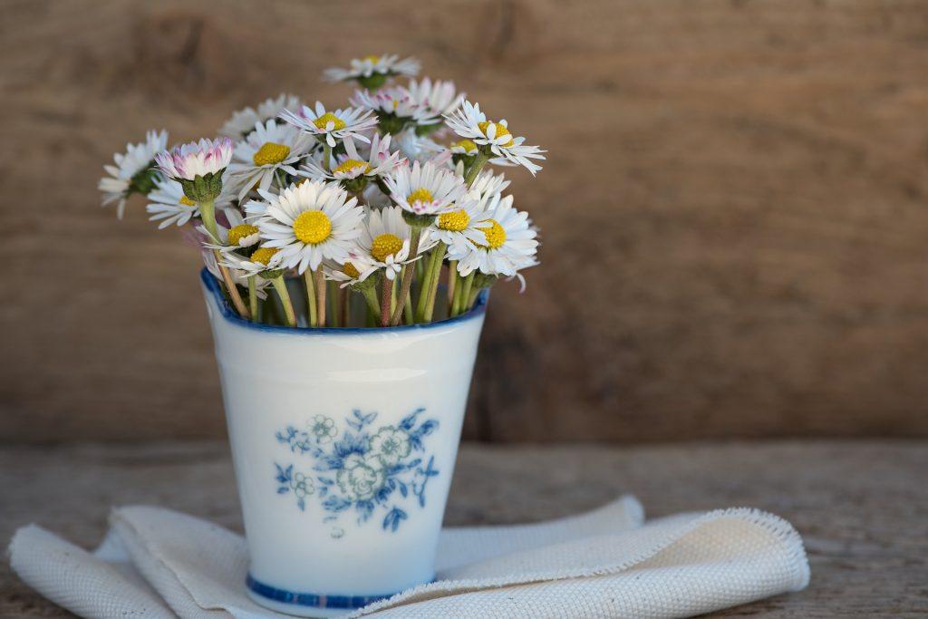 daisy-1346049_1920