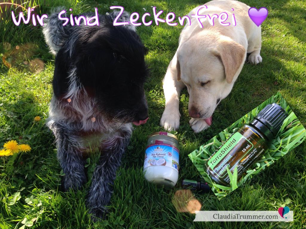Zeckenfreie Hunde mit Kokosfett & TerraShield