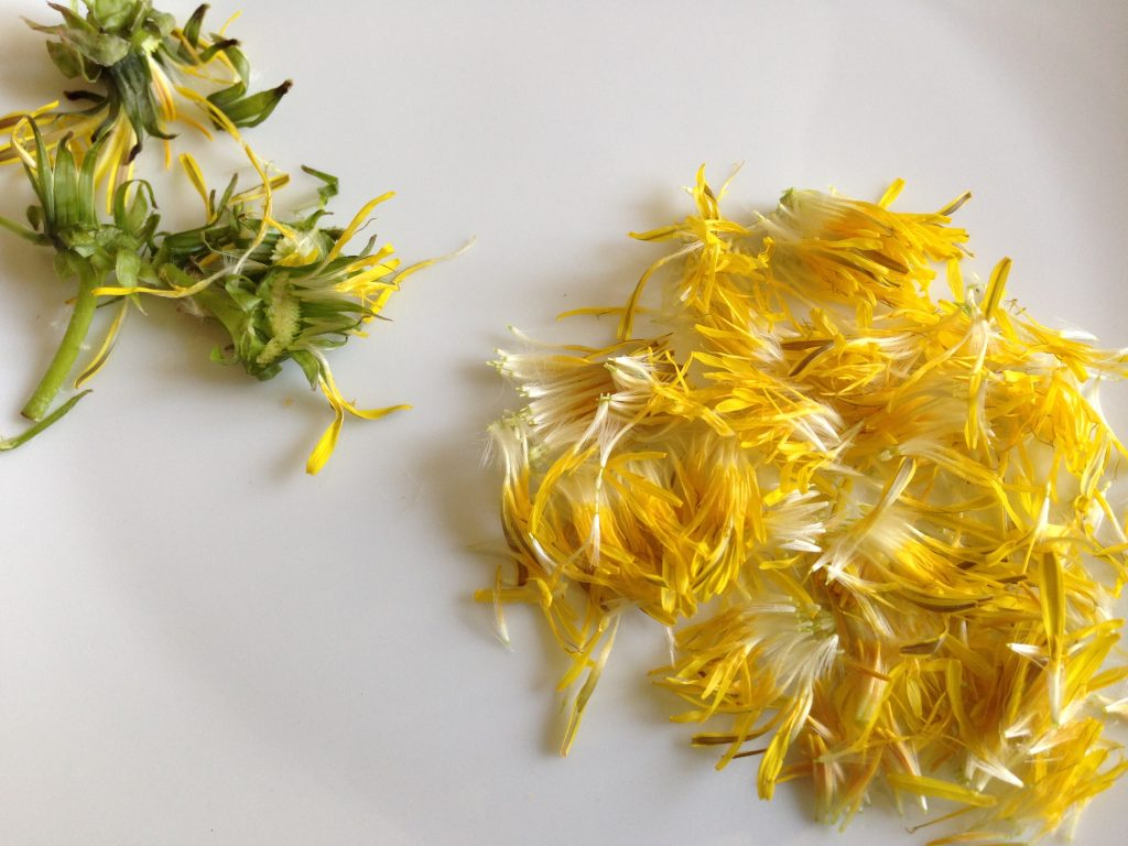 Löwenzahn-Blüten-Dekoration-Wildkräuter-ClaudiaTrummer