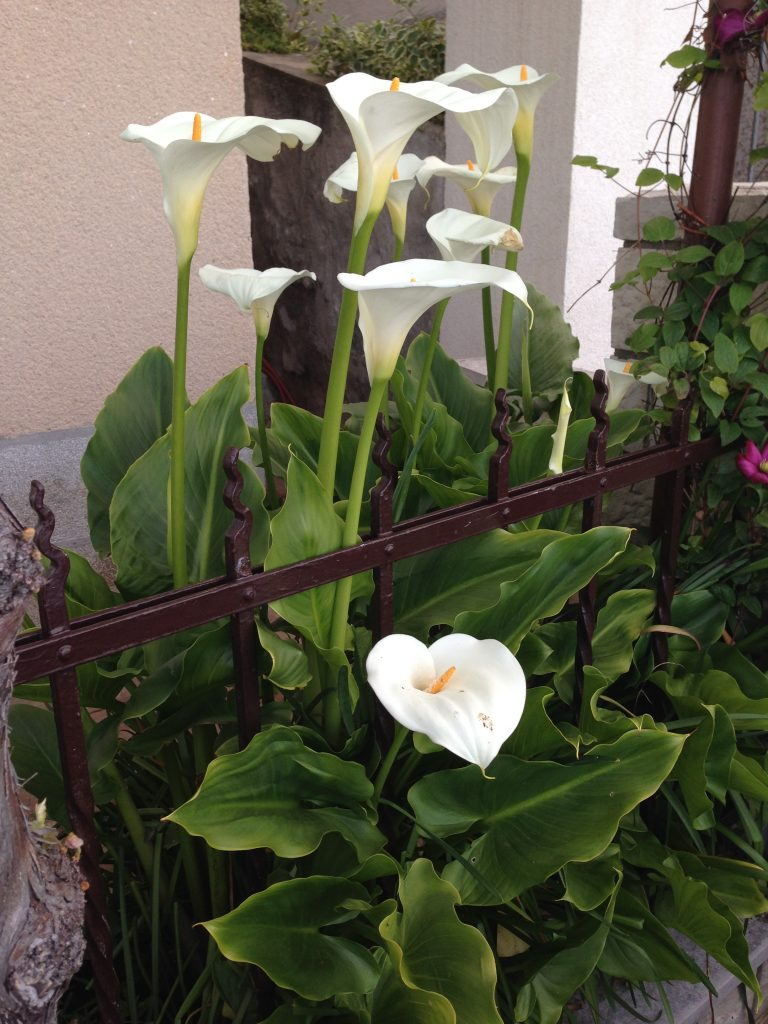 Blumenpracht-ClaudiaTrummer-Opatija