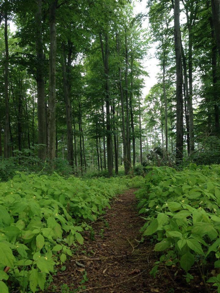 Waldspaziergang Gleichenberg Kogel Claudia Trummer